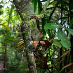 Ignacio Solano, expedición al Chocó Colombiano