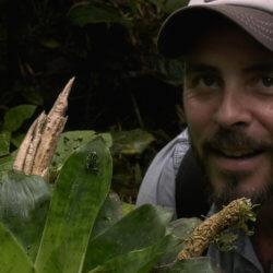 La tala indiscriminada y los incendios forestales amenazan especies de flora y fauna en Panamá