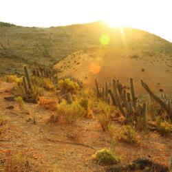 Ignacio Solano - Investigación en el desierto chileno