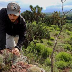 Ignacio Solano, expedición a México