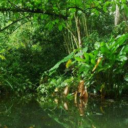 Ignacio Solano, investigación en la Selva de Chicaque