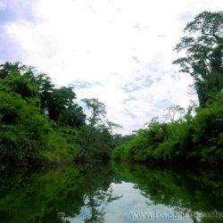 Ignacio Solano, investigación en la Selva Lacandona