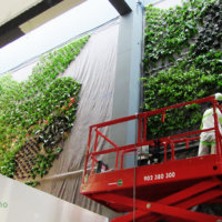 Ignacio Solano finaliza el mayor jardín vertical interior de Europa